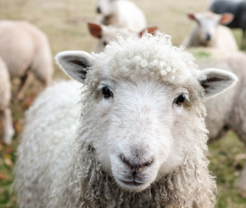 5 Reasons Why Merino Wool is Perfect All-Year Round